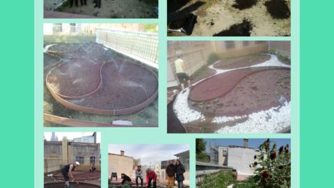 Creació d'un hort urbà